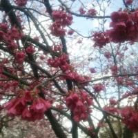 寒の戻り、赤い花…春は♪