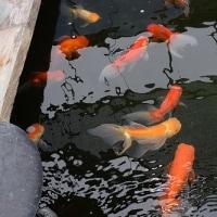 タメさん池