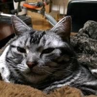 【hana】二日酔いにやさしい猫のぬくもり
