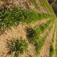 小麦と小豆の残量と、酒まんじゅうの販売期間について