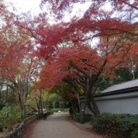 井の頭公園の紅葉