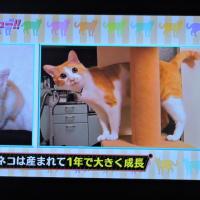 12/2 生き物に この猫、レンさんの馬鹿ネコじゃない?
