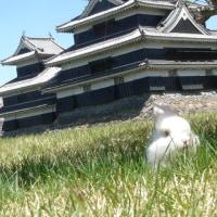 松本城の桜を見に行きました