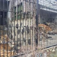 俺VS動物園 第12~14節