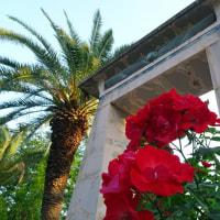 鶴見緑地のアジサイが咲き始めました