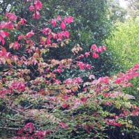 紅葉を見つけて・・・代々木公園にて