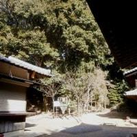 走田神社の保存樹木(川をたどれば湯谷川編)