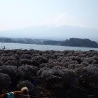 伊豆・河口湖の旅 その6 大石公園