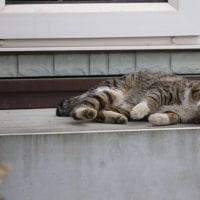 猫探訪・・ごろん、ごろんと