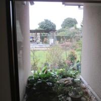 山茶花を坪庭に・・・