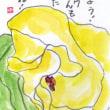 寝坊のハマボウ