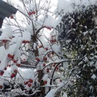 雪まだ降ってます