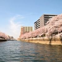 3/20~【日本橋乗船】深川の桜回廊&5大運河めぐりクルーズ