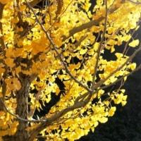 まだ、秋が残っていた!‥③ 【ひで某】