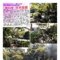 横浜-187  横浜公園 日本庭園
