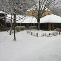 1月14日(土) かわなの雪景色