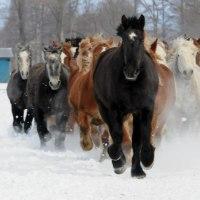 十勝牧場の馬追い・・2