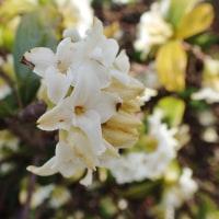 立山の背景も大気も寒いけれど、春の花を探しに走る。