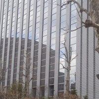 札幌まちなか探検隊  今日の景色2  ビルinビル(´∀`*)v