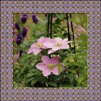 5月下旬の花回廊の花を