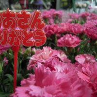やっぱりお花が嬉しいね。 母の日☆プレゼント