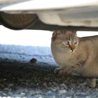猫探訪・・ノンちゃん2号発見