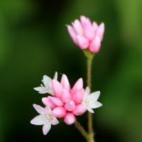 色とりどりの花で賑わっていた野川公園