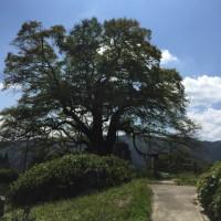 醍醐桜とサスペンションの動き