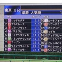 10月22日(土) 現地応援 レッドルチア 新馬勝ち!