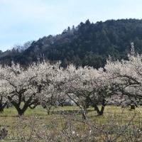 二日連続で、『麺ランチ』へ・・・(埼玉・東松山等)【29.2.22(水)、23(木)】