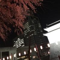 桜 満開 夜桜三昧♡ 静岡市葵区駿府城東御門前 もうすぐ静岡まつり