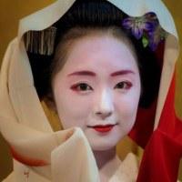 赤襟の清ちゃんと、三毛猫のたま (46)