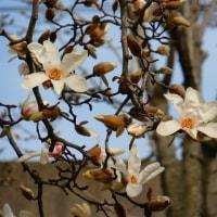 梅ヶ枝公園の春の花 ・・・ 愛知県一宮市