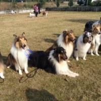 滋賀でオフ会 名犬ラッシーどんだけ~!