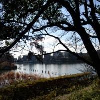 洗足池の富士山