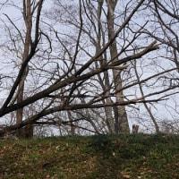 道の脇に倒木があった