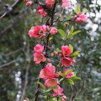 桜を見た後に