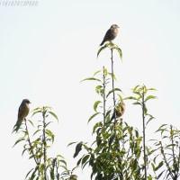 松本平広域公園  野鳥との出逢い♪