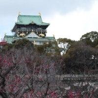 大阪城の梅 『8のつく日はwebにお花を』(34)