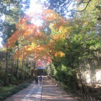 かまくらもみじ(14)寿福寺