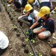 「中環の森」美園小学校4年生の活動【6月1日開催報告】