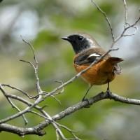 夏鳥と冬鳥と+