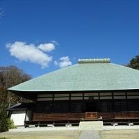 「セツブンソウ・浄妙寺」/鎌倉(2017早春)