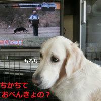 テレビに映っている人は?