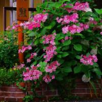 町家の花壇