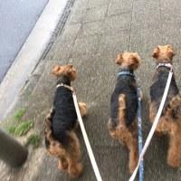 小雨の中の今朝の散歩は。。。