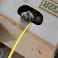 HappyCatさんで『猫学』を受講しました♪(2)