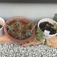 庭のメンテナンス
