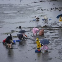 雨の中の潮干狩り