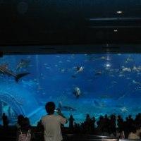 沖縄本島観光!美ら海水族館!!